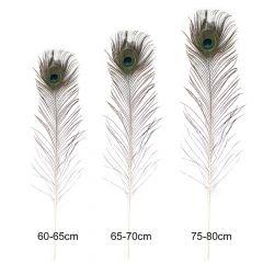 Losse pauwenveren 60-80cm - 5st